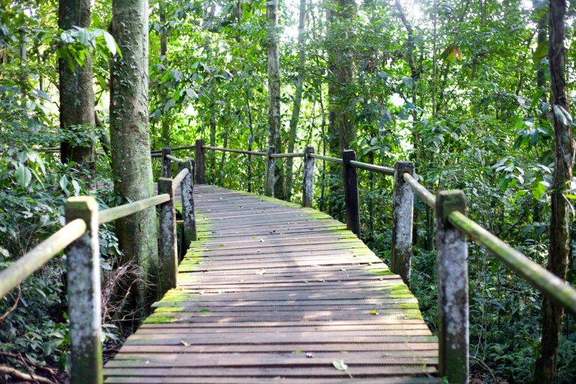 Travel in the Amazon Rainforest