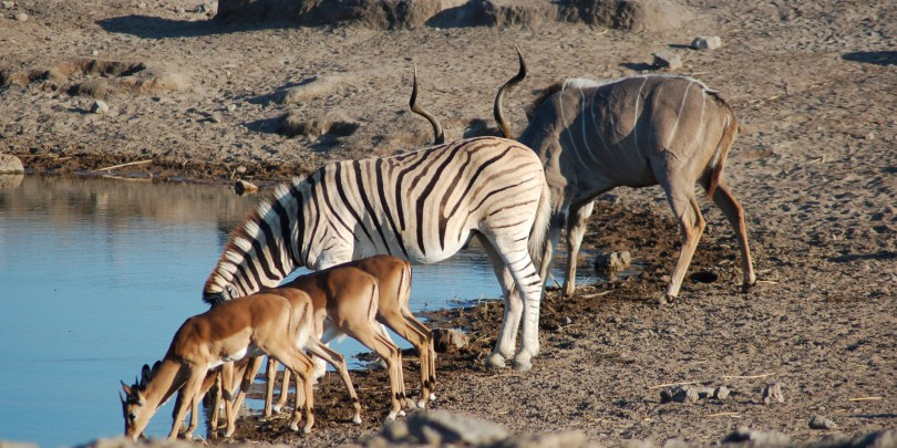 Wildlife at Kidepo