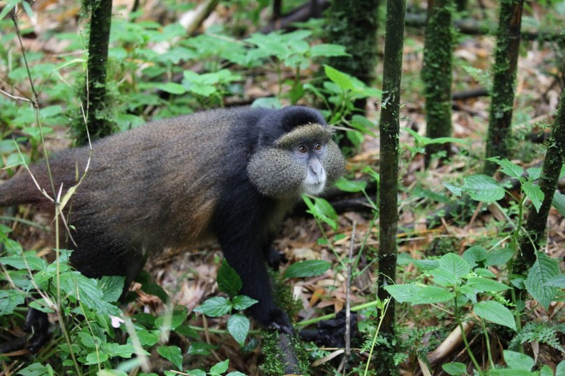 Essential Journeys Rwanda