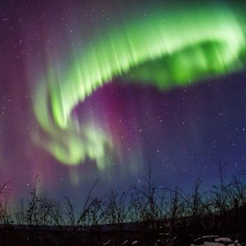 Alaskan Ecotour