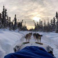 Dog Sledding on the Northern Lights Adventure in Alaska