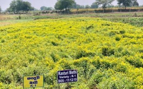 special-crop-fertilization-raipur