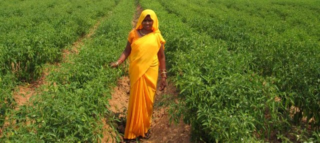 dantewada-vegtable-farmer-lady