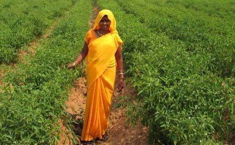 dantewada-vegtable-farmer-lady