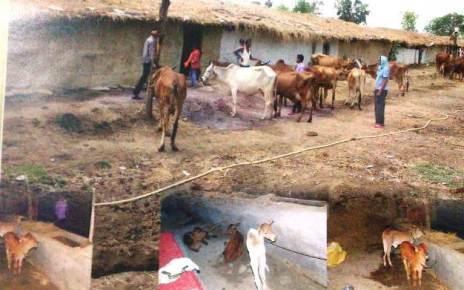 dairy-farm-rojgar-scheme-report-17-march-2021