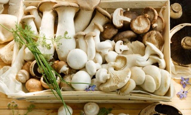 Risultati immagini per funghi misti