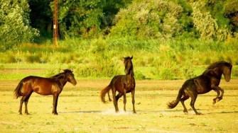 Turiștii pot vizita atracțiile din zona Sulinei, caii din Pădurea Letea numărându-se printre ele. FOTO Safari Delta Club
