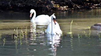 Delta Dunării, destinația ideală pentru turiștii care își doresc o vacanță în natură post-pandemie FOTO AMDTDD