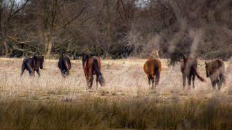 Caii de la Letea. FOTO Paul Alexe