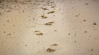 Urme pe nisip. FOTO Paul Alexe