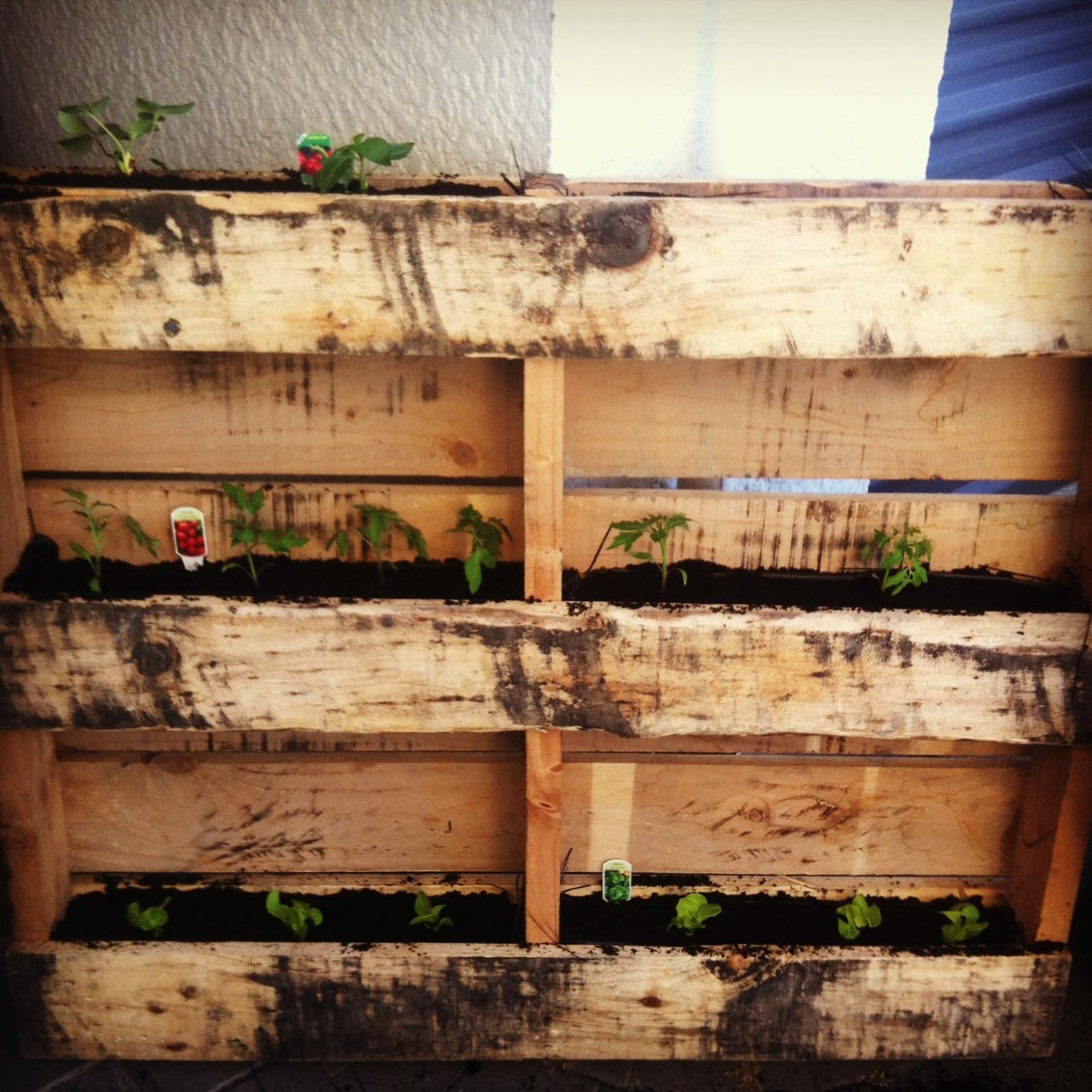 Easy Vegetable Gardening With Pallets 10