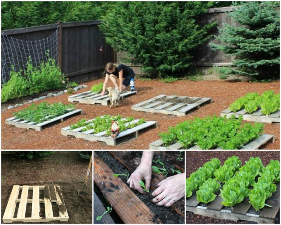 Easy Vegetable Gardening With Pallets 16