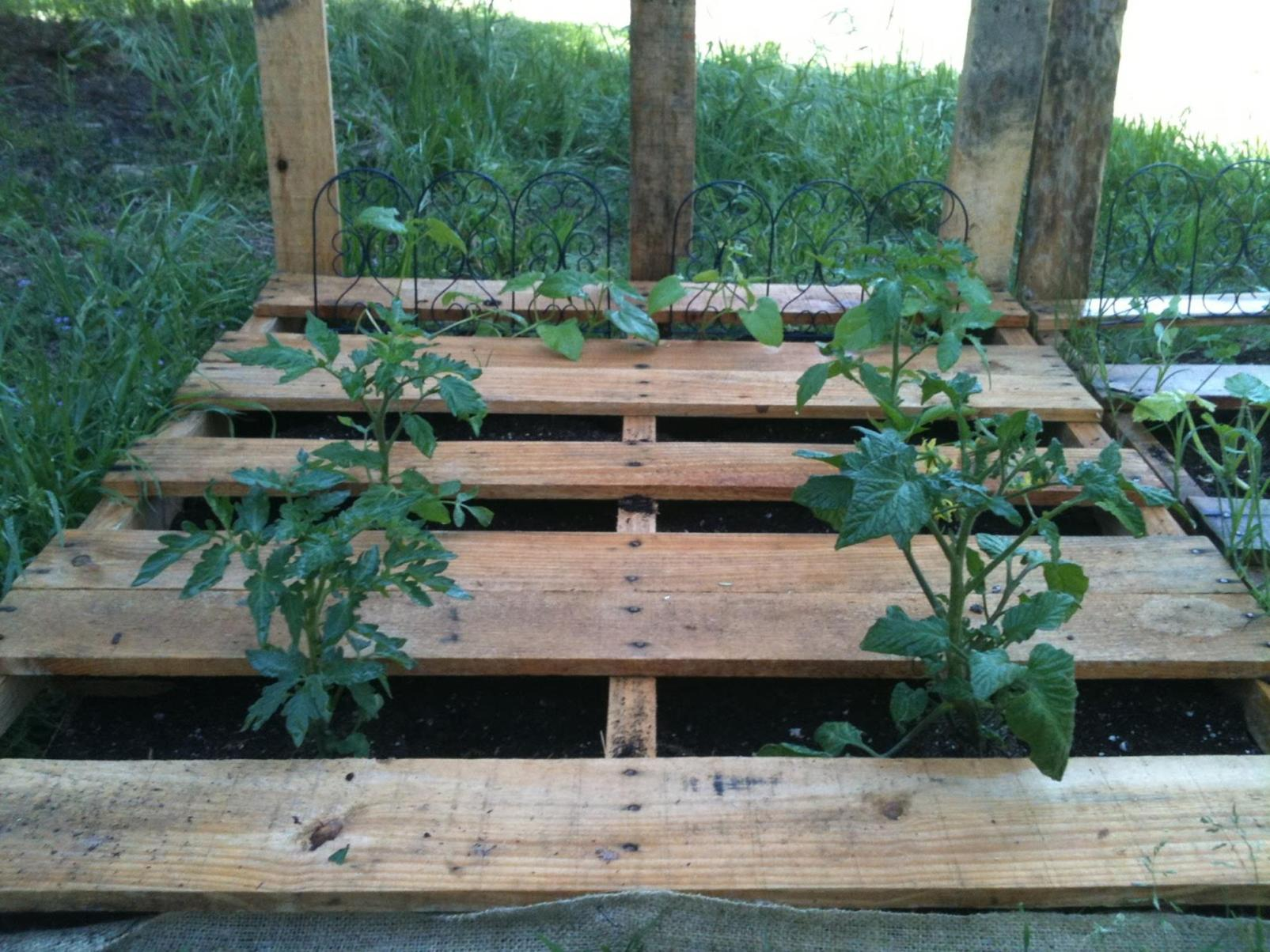 Easy Vegetable Gardening With Pallets 18