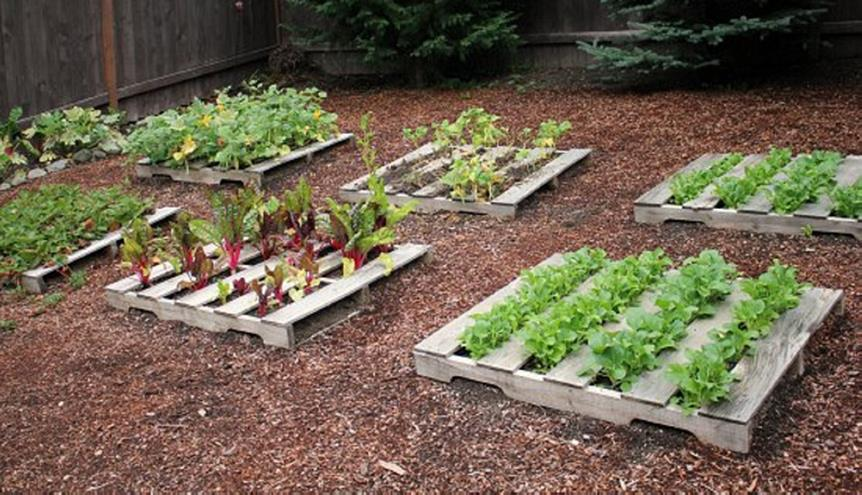 Easy Vegetable Gardening With Pallets 22