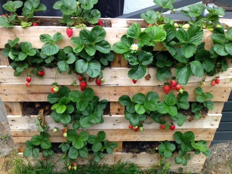 Easy Vegetable Gardening With Pallets 5