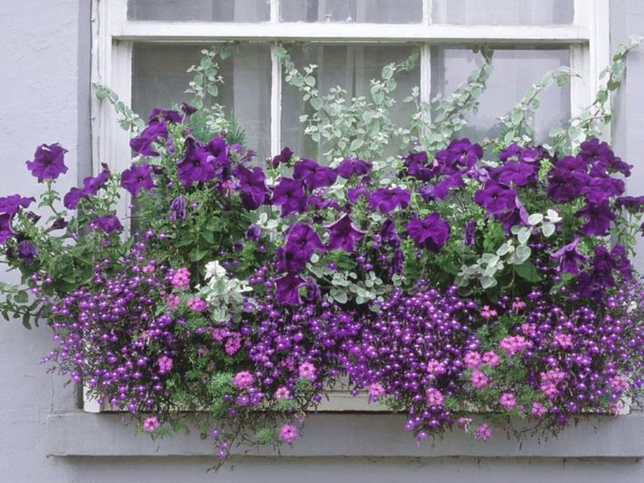 Best Beautiful Cascading Flowers For Window Boxes Ideas 10