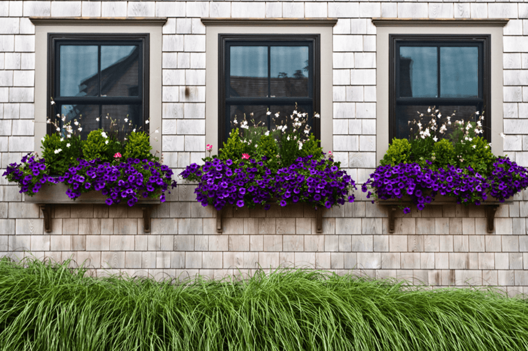 Best Beautiful Cascading Flowers For Window Boxes Ideas 13