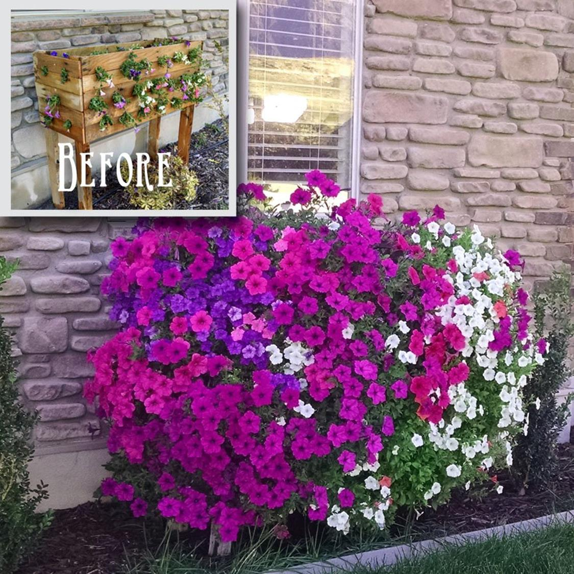 Best Beautiful Cascading Flowers For Window Boxes Ideas 16