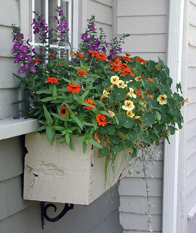 Best Beautiful Cascading Flowers For Window Boxes Ideas 28