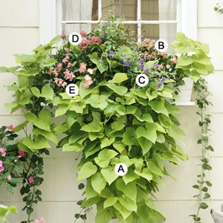 Best Beautiful Cascading Flowers For Window Boxes Ideas 3