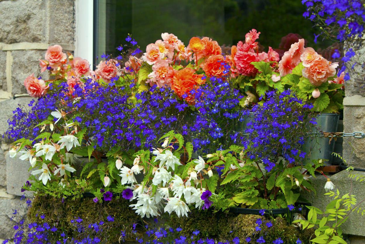 Best Beautiful Cascading Flowers For Window Boxes Ideas 34