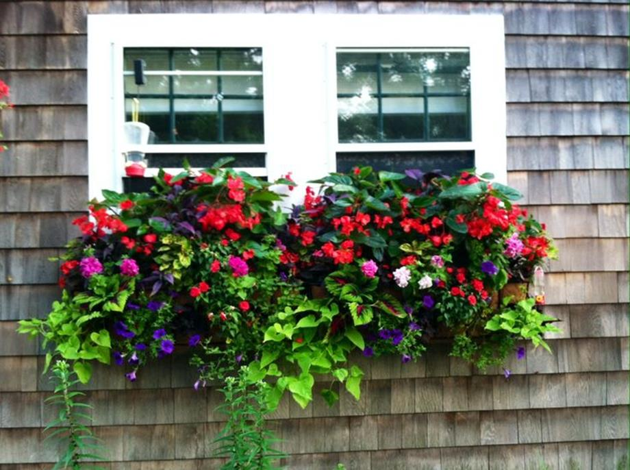 Best Beautiful Cascading Flowers For Window Boxes Ideas 4