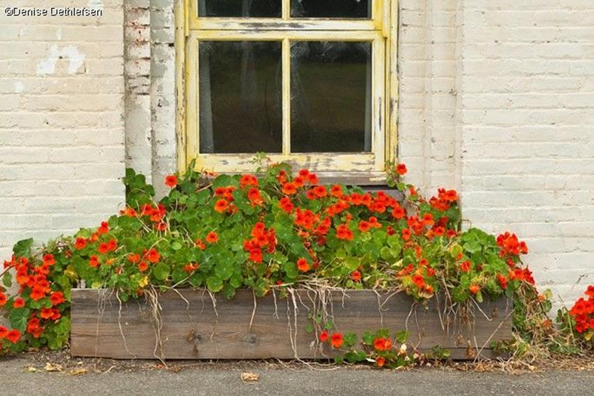 Best Beautiful Cascading Flowers For Window Boxes Ideas 40