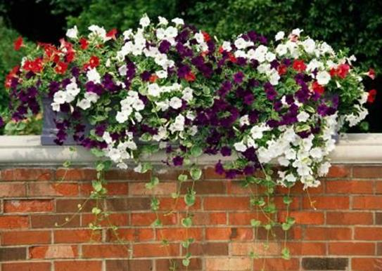 Best Beautiful Cascading Flowers For Window Boxes Ideas 6
