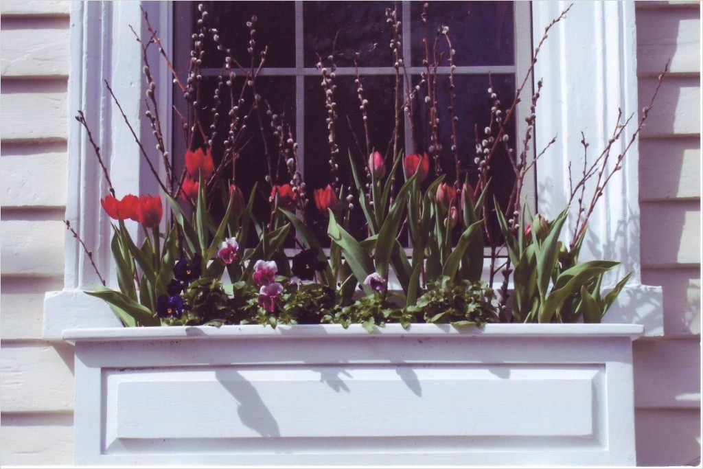42 Best Flowers for Window Boxes 33 Best Flowers for Spring Window Boxes 2