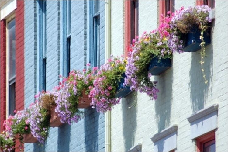 42 Best Flowers for Window Boxes 28 the Best Flower Annuals for A Window Box 6