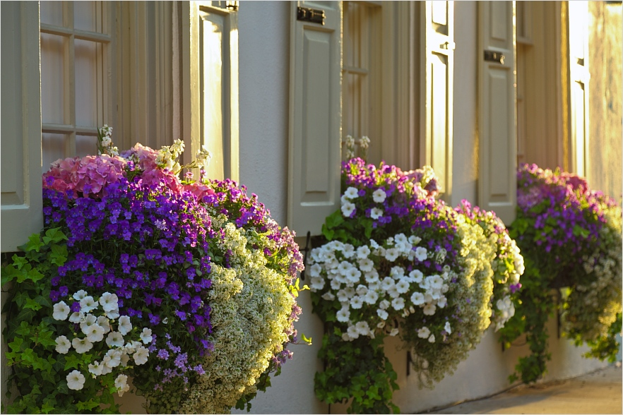42 Best Flowers for Window Boxes 42 who Plants A Seed Window Boxes 1
