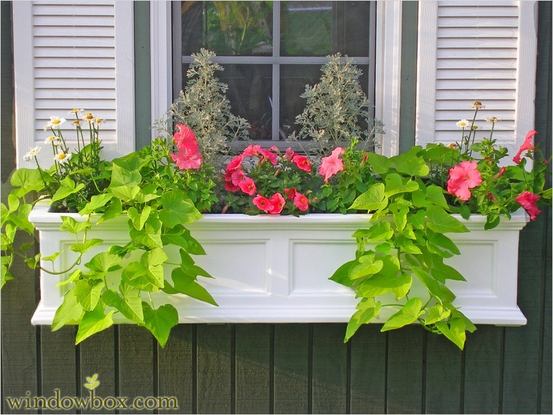 42 Best Flowers for Window Boxes 29 Self Watering Window Boxes Flower Boxes & Deck Rail Planters 5