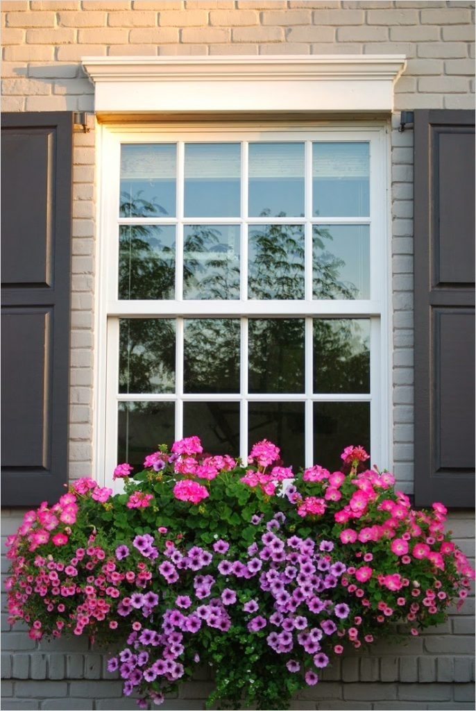 42 Best Flowers for Window Boxes 93 the Best Plants for Wonderful Spring Window Boxes 3