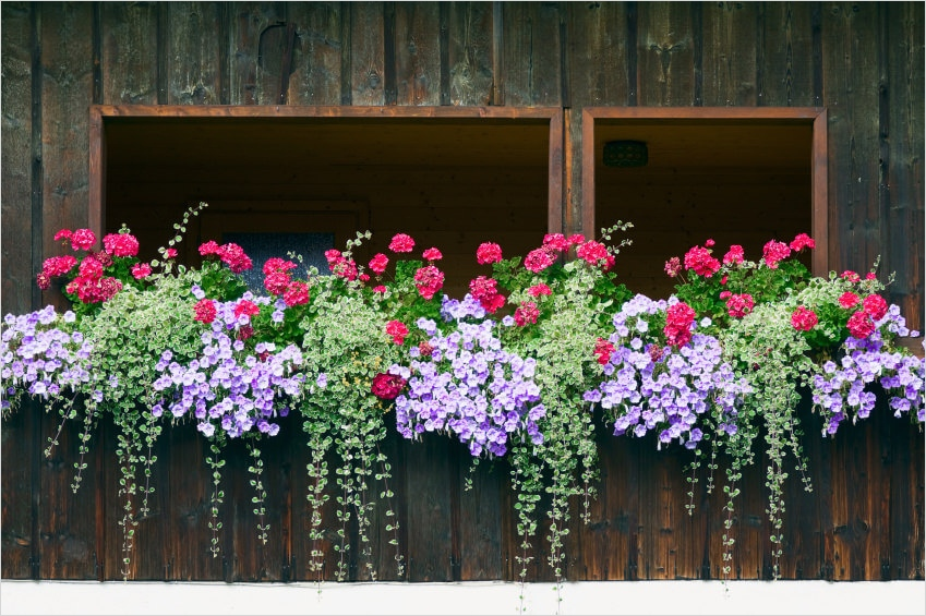 42 Best Flowers for Window Boxes 85 40 Window and Balcony Flower Box Ideas Photos 7