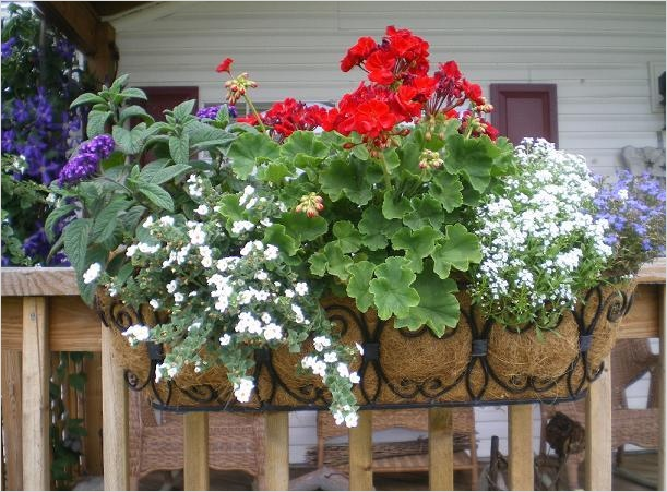 42 Best Flowers for Window Boxes 43 Best Plants for Window Boxes 8