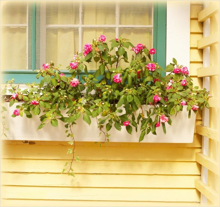 42 Best Flowers for Window Boxes 71 Best Plants for Window Boxes 1