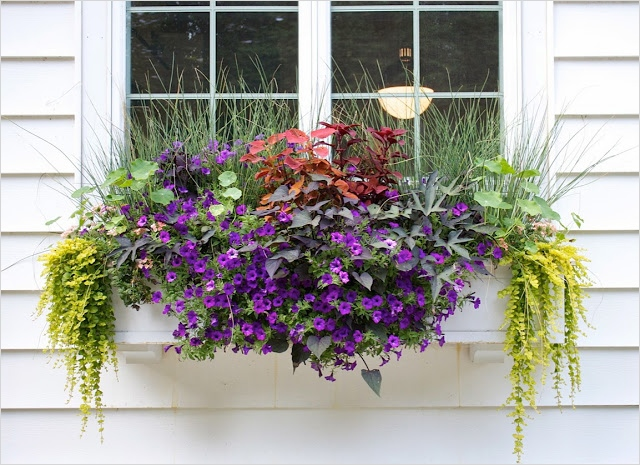 42 Best Flowers for Window Boxes 79 the Impatient Gardener the Evolving Window Box 3