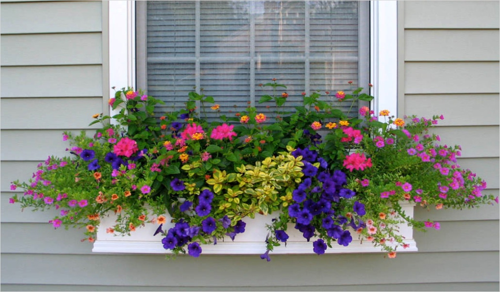 42 Best Flowers for Window Boxes 84 Shapes and forms Of Flowers for Window Boxes 4