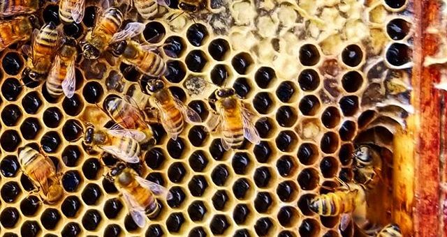 Waxing on About Beehives: Woodware Finishes