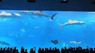 美ら海水族館のお得な料金やジンベエザメとマンタが泳いでいる動画まで紹介