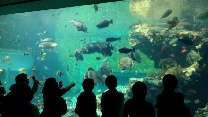 The coral sea in Churaumi Aquarium 1