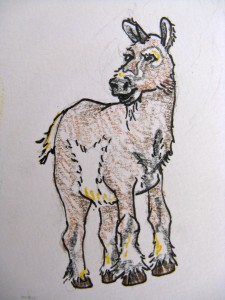 IPCA Unicorn, Unicorn Sketch