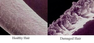 Healthy hair vs damaged hair