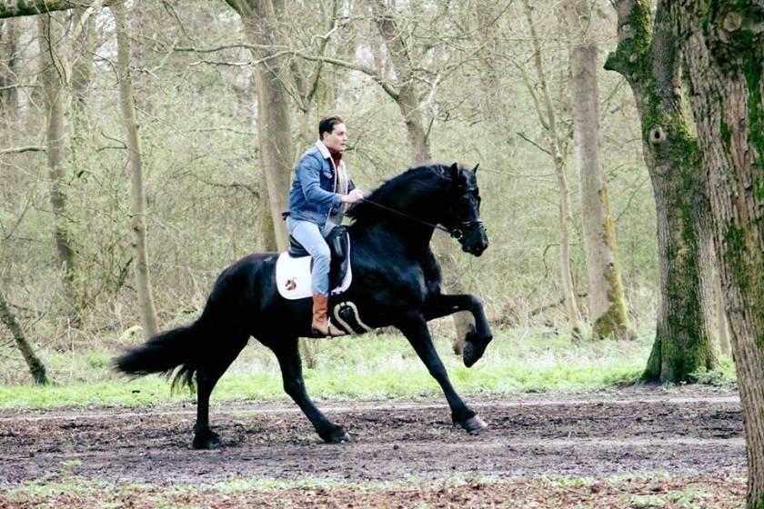 douwehorse2