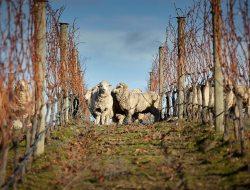 Organic Wine from New Zealand