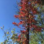 A Fall Weekend on the Farm