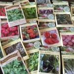 Vegetable Gardening: From Seeds to Skillet