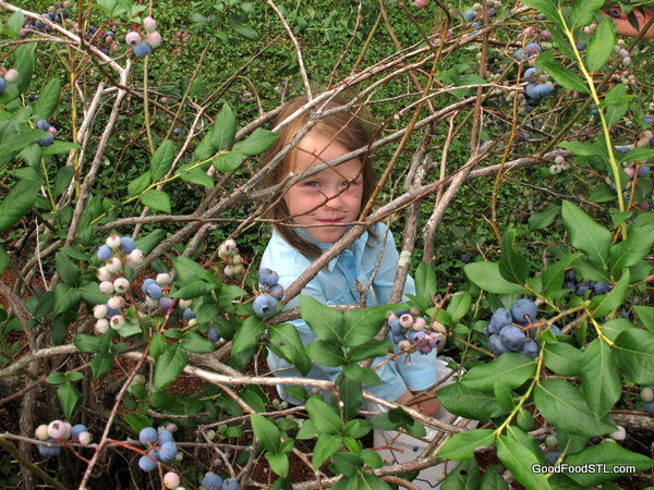 Addie and Blueberries