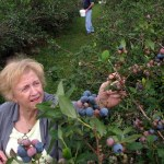 Blueberry Picking: Family Fun & Good Eating