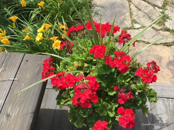 flowers garden farm *